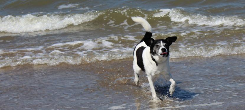 Am Hundestrand zeigt sich ob Langläufer oder Wasserratte