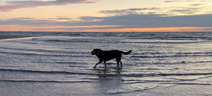 Noordwijk aan Zee: das Hundeparadies